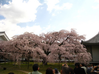 醍醐寺周辺桜見物028.JPG